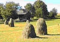 tuvia farm
